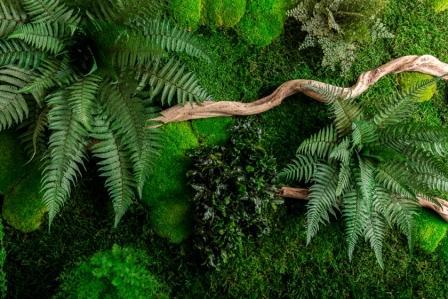 rastliny mach drevo detail